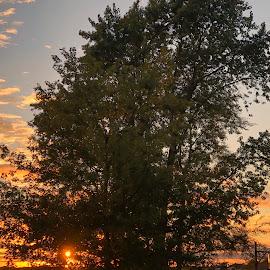 Beautiful Sunset by Debra Summers - Landscapes Sunsets & Sunrises ( sky, grass, sun, trees )