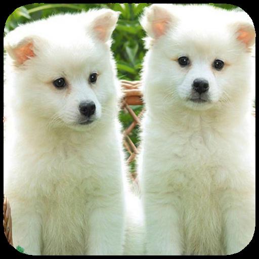 Puppy Wallpaper HD