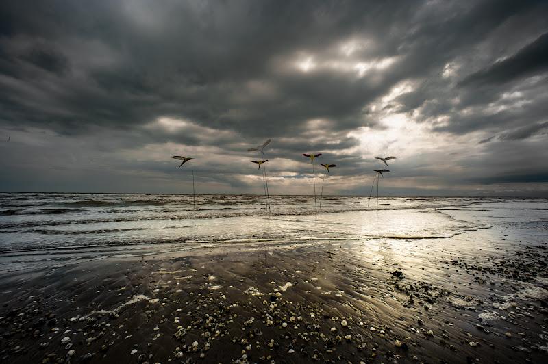 the beach di bi