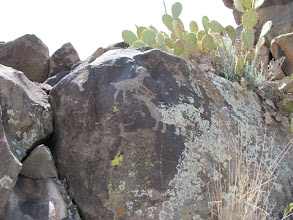Photo: Some petroglyphs. Looks like the moss is going to ruin this one.