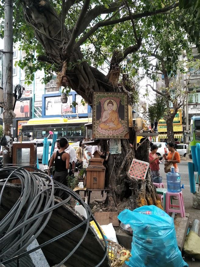 街路樹に掛けられたブッダの絵