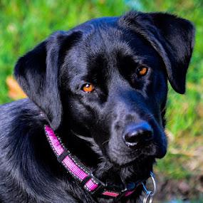 Minnie by Lori Louderback - Animals - Dogs Portraits (  )