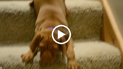 Video: Going down the stairs the 1st time! Turn volume down so you don't have to listen to me!