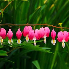 Love Flowers by Irfan Maulana - Nature Up Close Flowers - 2011-2013