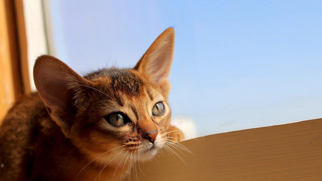 Клуб любителей кошек москва сайт клубы женские закрытые
