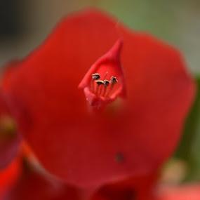 open Lips by Abhishek Majumdar - Nature Up Close Flowers - 2011-2013 ( saurabh, madhur, sarbajit, prithvi, nitesh )