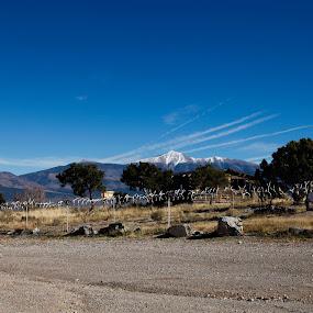 Sky Lines in Nevada by Surentharan Murthi - Landscapes Mountains & Hills ( field, u.s.a, mountain, sky, desert, nature, blue, nevada, meadow, landscape, dessert )