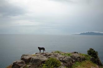 Photo: 天涯一孤狗