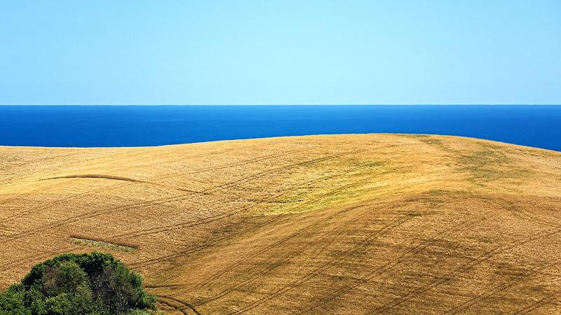 Un mare di grano di renzodid