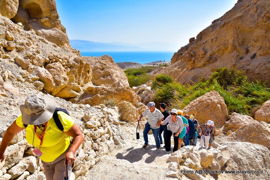 Экскурсия в заповеднике Эйн-Геди с гидом в Израиле Светланой Фиалковой. По склонам ущелья ручья Давида.