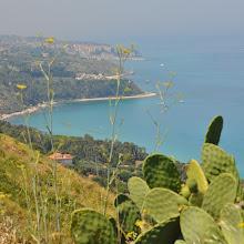 Photo: Finocchio selvatico e fico d'india,Calabria,Italy