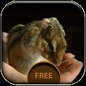 Hamster Live Wallpaper icon