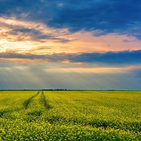Traces by Baltă Mihai - Landscapes Prairies, Meadows & Fields ( clouds, field, blue, traces, romania, yellow, landscape, sun )