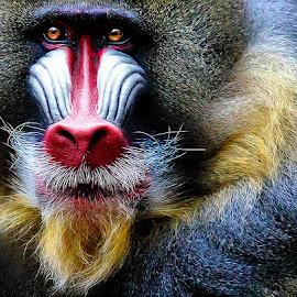 by John Larson - Animals Other Mammals (  )