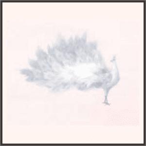 白羽の孔雀
