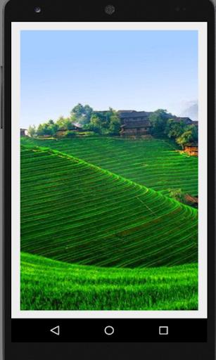 Rice Terraces Beauty
