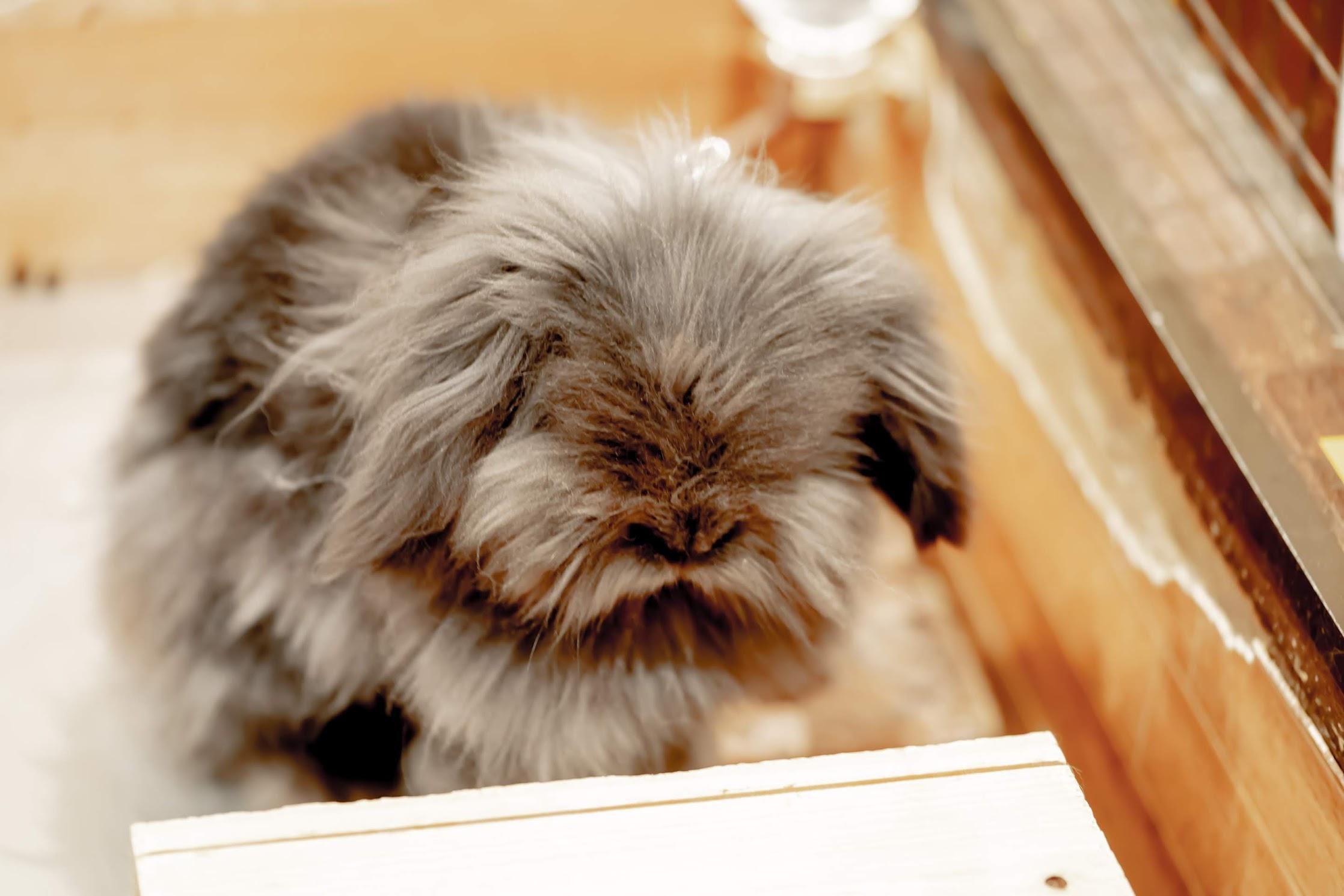 天保山アニパ ウサギ2