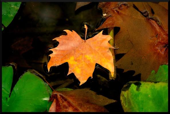 Foglie fresche e foglie morte... di ChristianGiulianetti