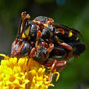 Nomad Bees