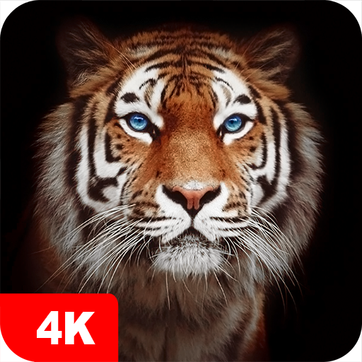 Tiger Wallpapers 4k መተግባሪያዎች Google Play ላይ