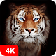 Tiger Wallpapers 4K Download for PC Windows 10/8/7