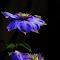 photomania-d803845db3d91f1507ceea0d264d700b.jpg