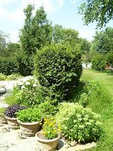 Photo: going into the backyard