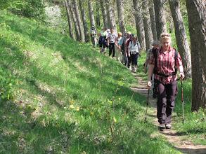 Photo: Wanderung zu den Adonisröschen