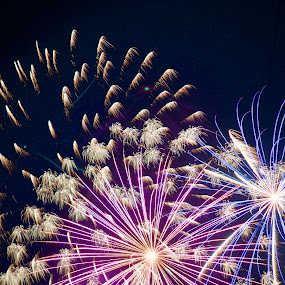 Tint by Savannah Eubanks - Public Holidays July 4th ( firework, independence day, fireworks, pyrotechnics, holiday,  )