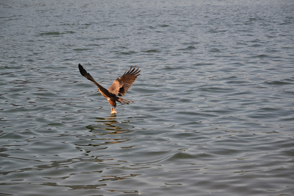Pesca a Volo di RR27