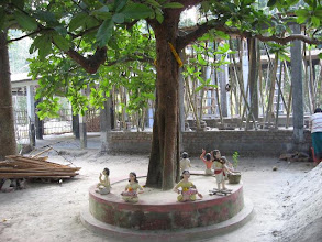 Photo: Chalta Tree - called Jogamaya by Prabhu Jagadbandhu and is universally present all ashrams of Prabhu Jagadbandhu