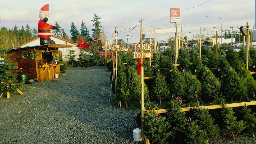 Holly Jolly Tree Lot - Christmas Tree