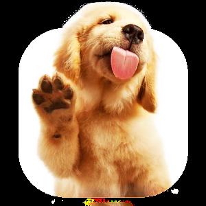Super Dog Lick Screen LWP v.1.0