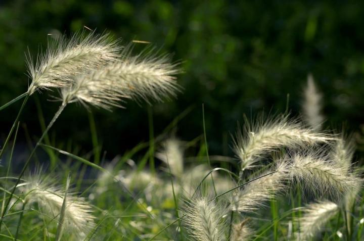 Ondeggiando al timido sole di primavera di cisconella