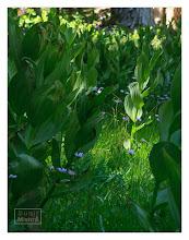 Photo: Eastern Sierras-20120716-505