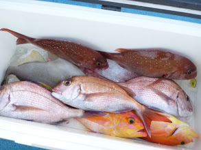 """Photo: いつもバリバリ釣る""""タムラさん""""も大苦戦の釣果でした。"""