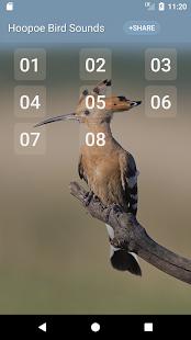 Hoopoe bird song - náhled