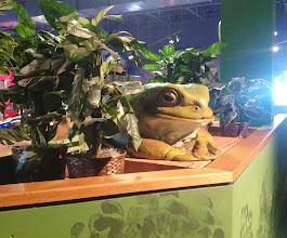 Photo: frog statue