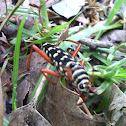 Escarabajo de antenas largas