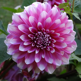 by Ashwanth Achu - Nature Up Close Flowers - 2011-2013