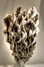 Photo: Root Fossil