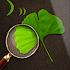 plant id identification