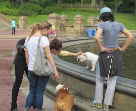 Photo: Keskuspuistossa pääsi tutustumaan sikäläisiin koiriin