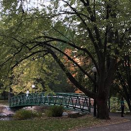 Park side  by Katie Neu - Instagram & Mobile iPhone ( tree, park, fall, bridge, dusk )