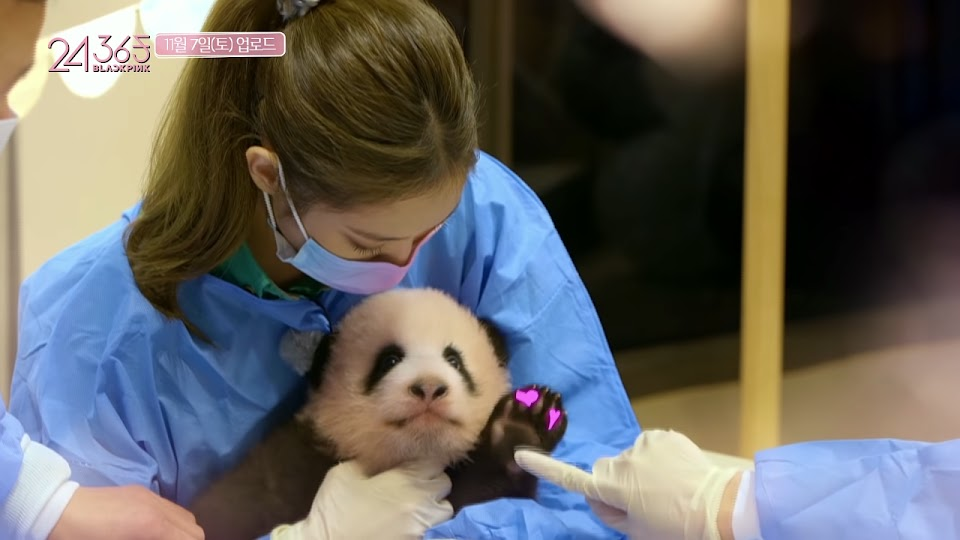 jennie and panda