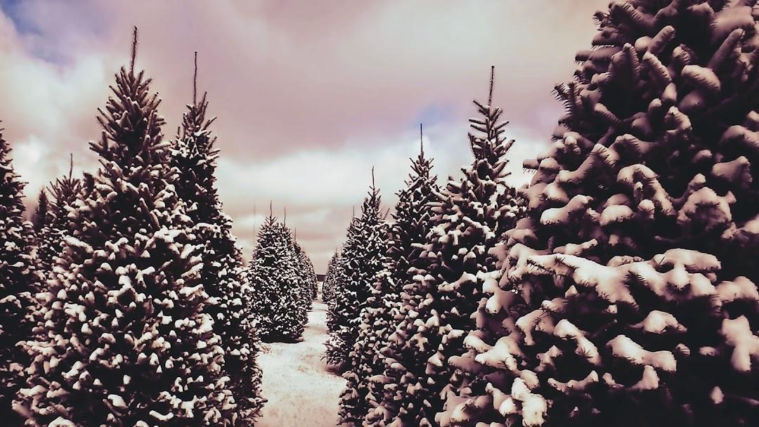 On Q Evergreen Farm - Christmas Tree Farm in Wausau