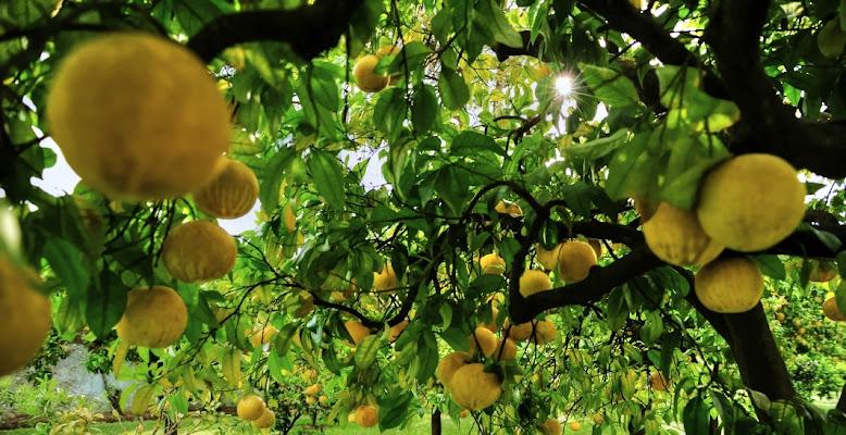 frutti estivi di Massimiliano zompi