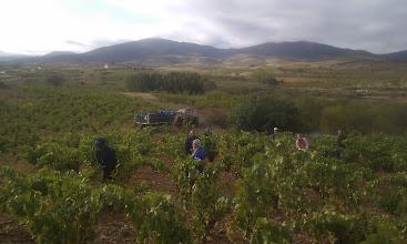 Photo: La vendimia (Fotografía y titulo enviado por Javier Lopez Guillen)