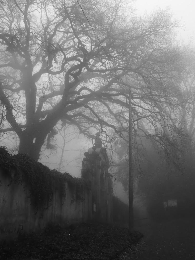 Quivi le brutte Arpie lor nidi fanno (Inferno, Canto XIII) di Agocentrico