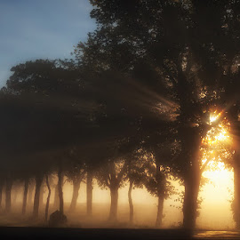Sunrise by Allan Wallberg - Nature Up Close Trees & Bushes (  )
